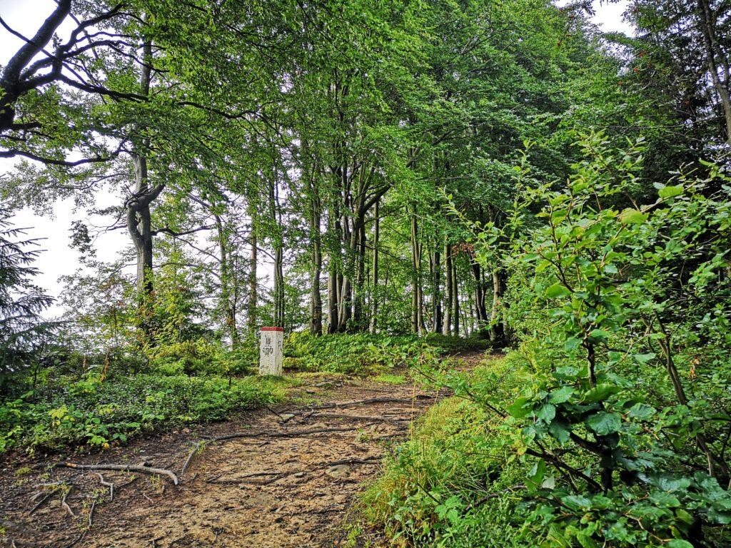 las, szlak, słupek graniczny