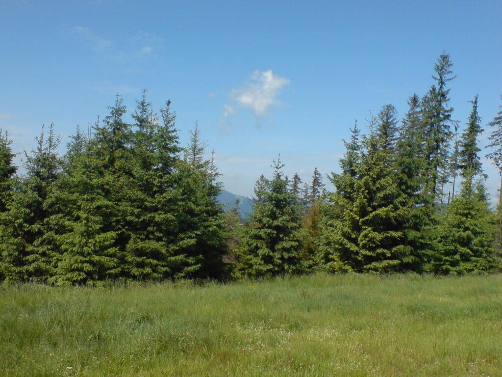 Polana i drzewa, las, niebieskie niebo