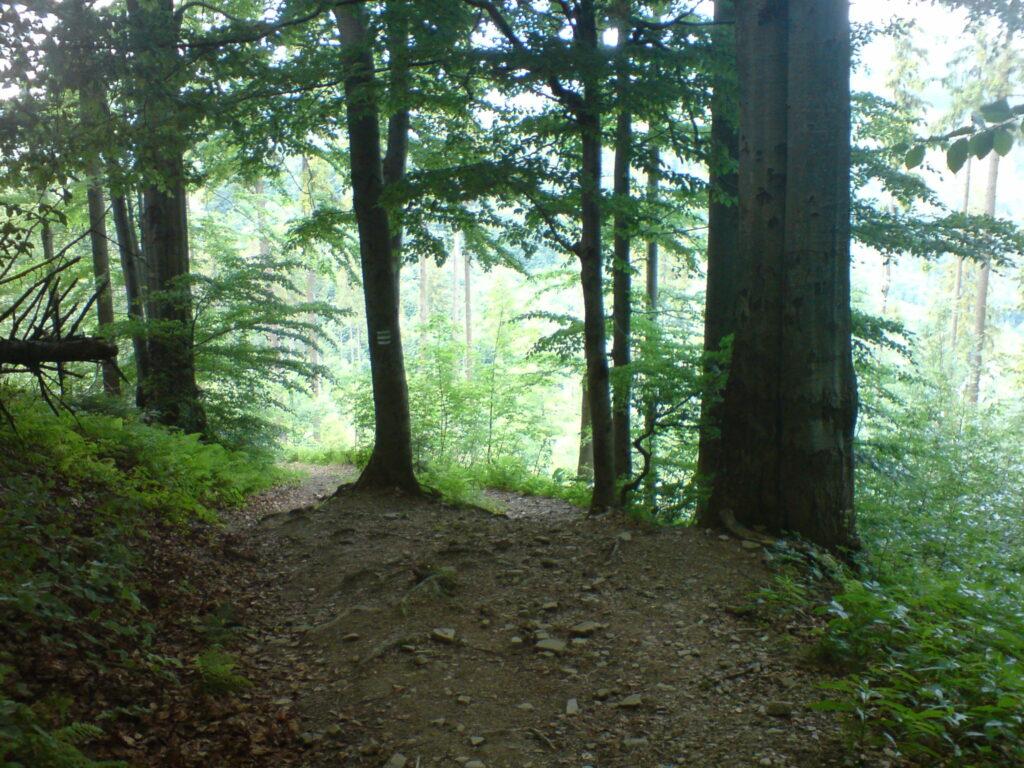 Szlak w dół lasem