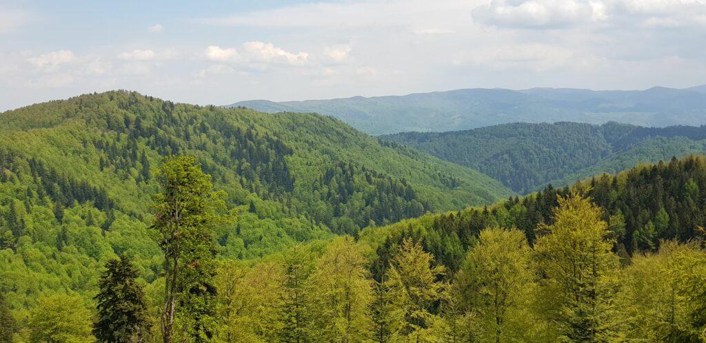 Widok na góry, lasy, krajobraz latem.