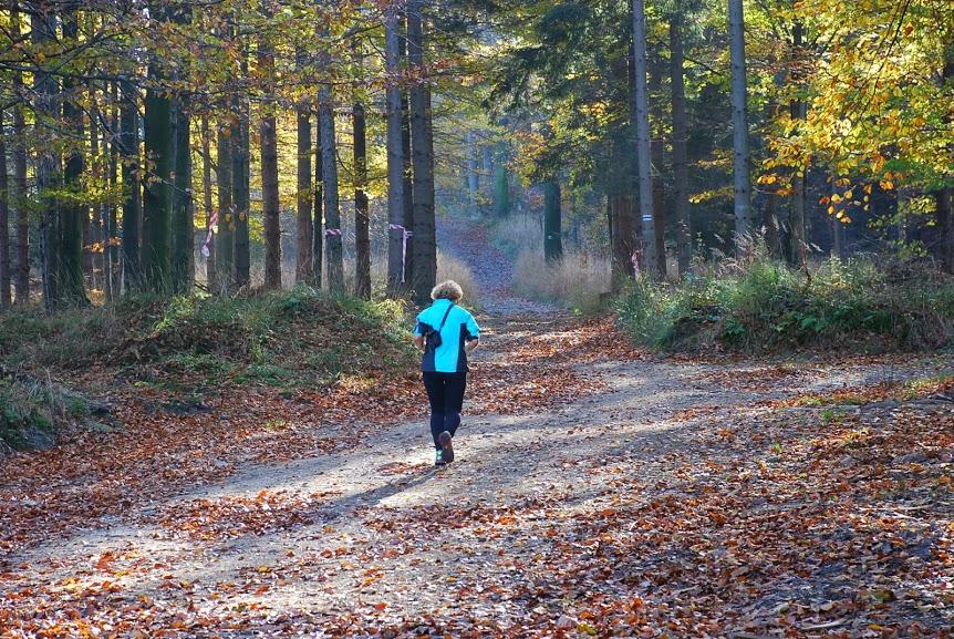 biegaczka las mały podbieg w tle