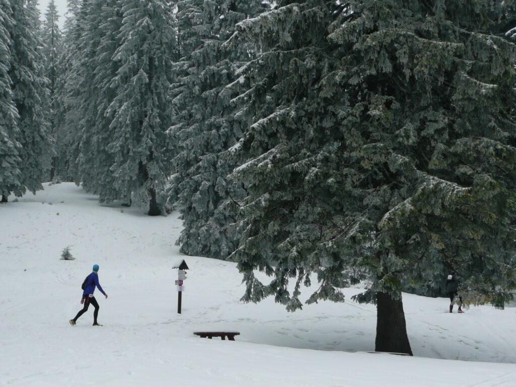 zima, śnieg, polana, drzewa, biegacz w tle